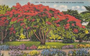Florida Royal Poinciana and Palm Trees 1947