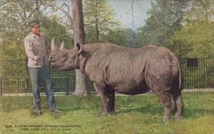 Two Horned African Rhinoceros New York Zoological Park New York City New York