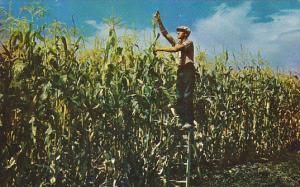 Man with Large Corn