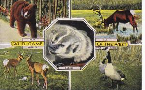 Wild Game Animals Of The West