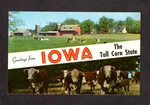 IA Greetings From Iowa Farming Cows Cattle Farm Tall Corn Banner Postcard