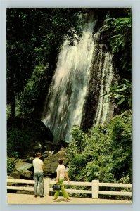 Puerto Rico- Caribbean, El Yunque Rain Forest, Chrome Postcard