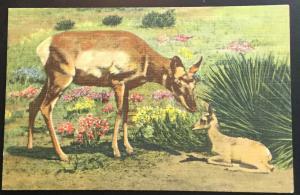 Linen Postcard Unused Mother Antelope & Baby NM LB