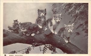Bird Nesting Cat 1907