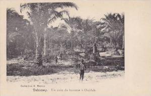DAHOMEY . 00-10s ; Un coin de brousse a Ouidah