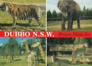 DUBBO , N.S.W., Australia , 1984 ; Western Plains Zoo, Tiger, Elephant, Giraffe,