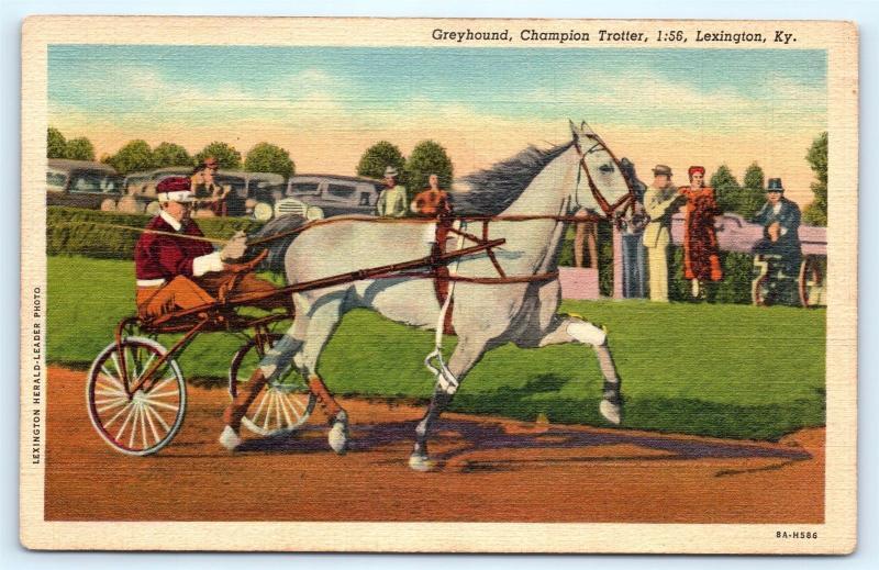 Postcard KY Lexington Horse Greyhound Champion Trotter Race