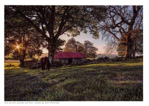 Postcard Stunning Photo by Rich McKinley, Not all who wonder are lost, Horse E75