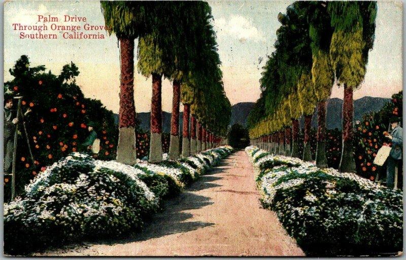 Vintage 1920 Southern California Postcard Palm Drive Through Orange Groves