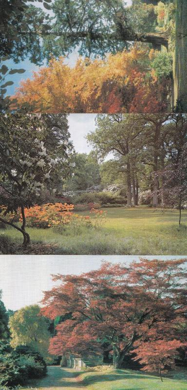 Sheffield Park Gardens Sussex Japanese Japan Maple Woodland Glade 3x Postcard s