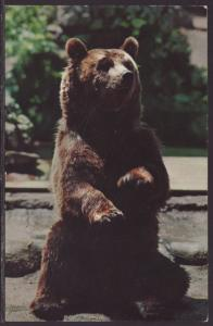 Alaskan Brown Bear Postcard BIN