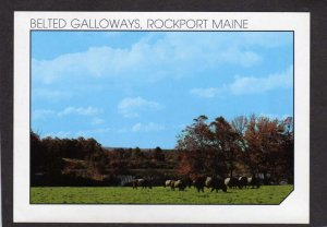 ME Belted Galloways Cows Aldermere Farm Lily Pond Rockport Maine Postcard