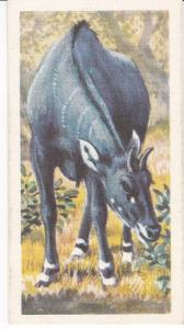 Trade Card Brooke Bond Tea Asian Wild Life No 35 Nilgai