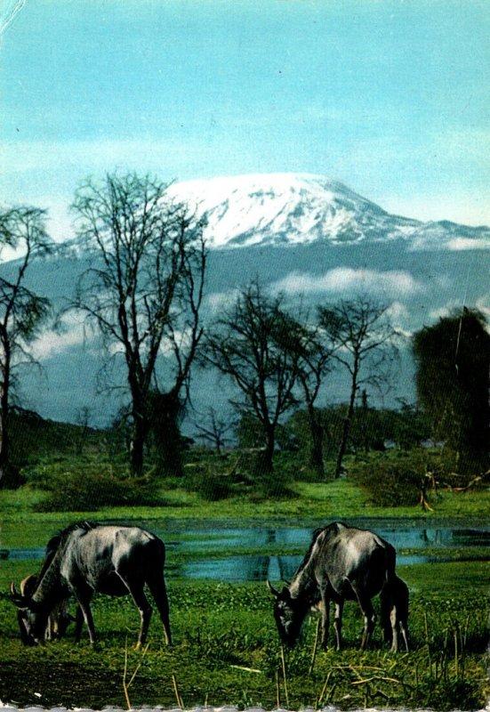 Kenya Mt Kilimanjaro From Amboseli 1970