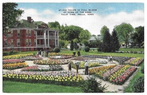 27,000 Tulips in Full Bloom at Home of the Aged, Tulip Time, Pella, Iowa, unused