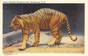 Washington DC, USA Tiger, National Zoological Park Postcard Post Card unused