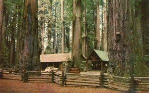 10062 Richardson Grove, Redwood Highway, Garberville, California