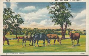 Blue Grass Scene in Old Kentucky, Showing Horses on Postcard, Unused