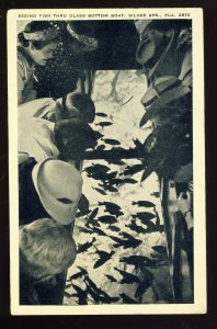 Silver Springs, Florida/FL Postcard, Seeing Fish Thru Glass Bottom Boat