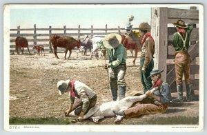 Western~Cow Hands Branding a Calf in a Coral~#8764 Detroit Pub Co~1910 Postcard