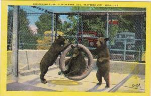 Michigan Traverse City Frolicking Bear Cubs Clinch Park Zoo 1953