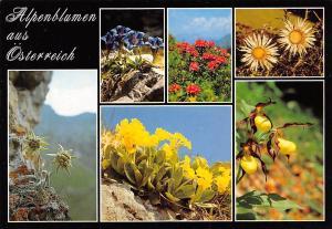 Alpenblumen aus Oesterreich multiviews Edelweiss Flowers Blumen