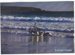 Penguins, Falkland Islands, 1980-1990s
