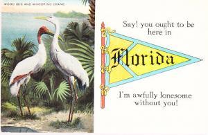 Wood Ibis & Whooping Crane - Florida Greeting.