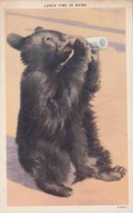 Maine Bear With Bottle Of Milk Lunch Time In Maine