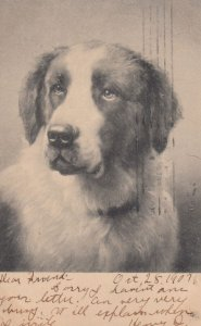 Dog Portrait , 00-10s