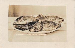 G24/ Lake Okoboji Iowa Real Photo RPPC Postcard c1920s Fresh Fish Caught