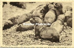 argentina, PATAGONIA, Young Sea Cows (1930s) Belgian Chocolate Ed