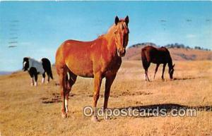 Horses in the Pasture  Postcard Post Card  Horses in the Pasture