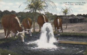 New Mexico Pecos Valley Cattle Watering At Artesian Well Curteich