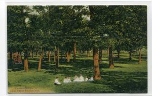 Woodland Park View Children Shawnee Oklahoma 1910c postcard