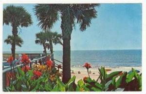 Flowers along Boardwalk, Myrtle Beach, South carolina, 40-60s