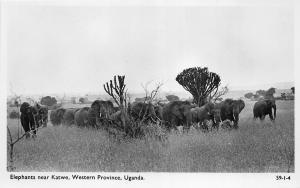 B84735 elephants near katwe western province  uganda