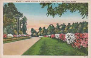 North Carolina Road Scene With Hedge Of Roses 1950