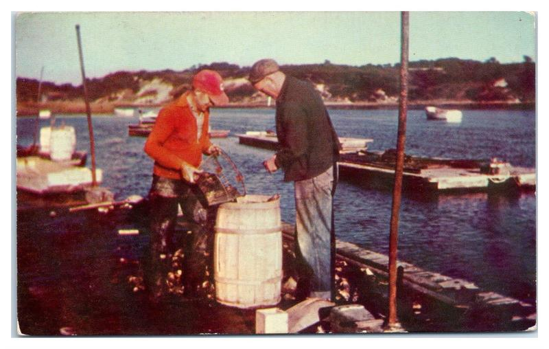 1960s Packing Oysters, Gould's Oyster Shack, West Chatham, Cape Cod, MA Postcard