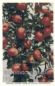 Virginia Apples Farming Postcard Post Card Virginia, USA Virginia Apples