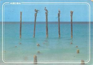 Pelicans - Aruba