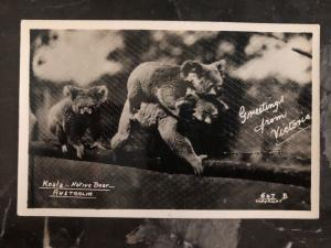Mint Australia Real Picture Postcard Koala Babies Native Bear