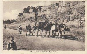 Camels caravan Africa postcard