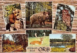 Wildpark Bad Orb multiviews Animals Owl Deer Forest River