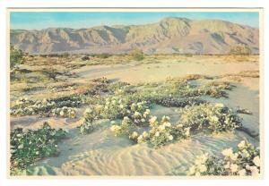 Arizona Gardens of the Desert Vintage Petley Postcard 4X6