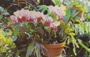 Pennsylvania Pittsburgh Phipps Conservatory Spring Flower Show Beautiful Catt...