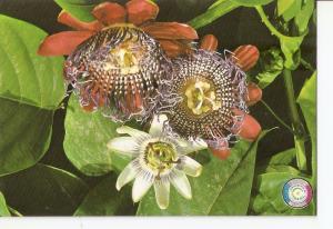 Postal 031653 : Flores del Paraguay