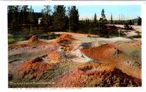 BLOOM, YP19, Paint Pots at the Thumb, Yellowstone National Park