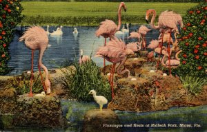 Flamingos and Nests