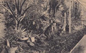 Konigl Botanischer Garten In Berlin Dahlem (Steglitz), BERLIN, Germany, PU-1919